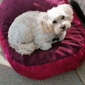 handmade dog beds Les Gets